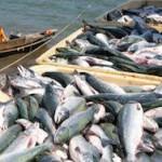 Экспорт рыбы из Сахалинской области снизился на 45%