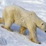 Поездка депутатов в Антарктиду обошлась всего в 600 тысяч рублей