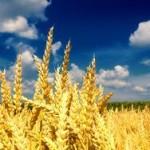 Украина экспортировала почти 26,1 млн тонн зерна
