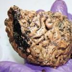 В доисторическом черепе нашли неповрежденный человеческий мозг