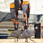 В США робот готовится установить рекорд на выносливость