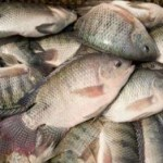 Вьетнам хочет стать лидером рынка морепродуктов