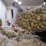 Россельхознадзор ограничил импорт египетского картофеля