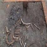 Археологи впервые нашли в Европе скелет боевого верблюда