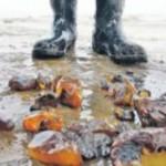 С охраняемых МВД складов исчез арестованный янтарь