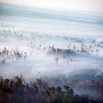 В Индонезии 50 тысяч человек заболели из-за смога