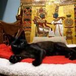 Ученые рассказали о влиянии популярности на кошек