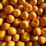 Из Абхазии в ДНР привезли 23 тонны мандаринов