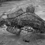 Ученые: древняя рыба может быть предком человека