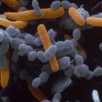 Новый антибиотик убивает всех