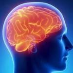 Охлаждение мозга поможет в борьбе с Альцгеймером
