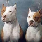 Полицейские застрелили собак, загрызших женщину