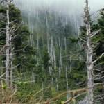 Кислотные дожди могли вызвать самое массовое вымирание