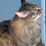 Спасшая ребенка кошка стала героиней мировых СМИ