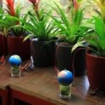 Голландская компания превращает энергию растений в электричество