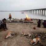 В Ганге обнаружили более ста трупов