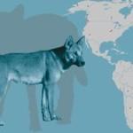 Собаки появились в Америке через тысячи лет после людей