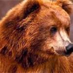 В Карелии медведь захватил проходную комбината