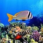 Морской фауне грозит вымирание через 150 лет