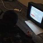 На Луганский ТРК завели дело за трансляцию российских каналов
