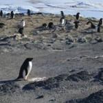 Пингвинам не повезло с чувством вкуса