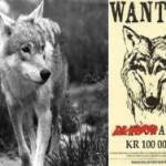 Экологи Норвегии предлагают $13 тысяч за головы охотников