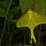 Зачем бабочке хвост