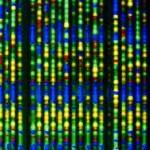 Можно ли предсказать функцию гена?