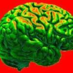 Стакан воды помогает улучшить работу мозга