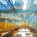 Российский ученый доказал бесполезность ГМО-растений