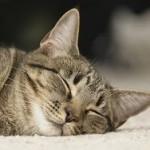 Ученые определили необходимое время для сна