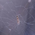 Пауки плетут электрическую паутину