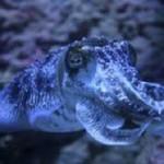 В морях Земли почти 228,5 тысяч видов живых организмов