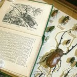 Ученые нашли самых живучих животных в истории Земли