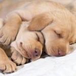 Психологи: сон способствует закреплению знаний