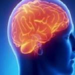 Найдена область в мозге, отвечающая за чувство вины