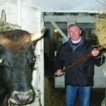 Молочный концлагерь, или Как стать канадским фермером