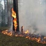В Забайкалье полыхают почти 3,5 тысячи га леса