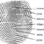В Германии усовершенствовали анализ отпечатков пальцев