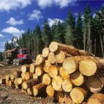 В Забайкалье запретили перевозить древесину