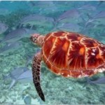 Во Флориде арестовали за катание на морской черепахе