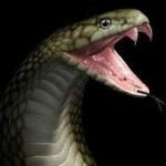 Народное средство от укуса змеи – еще один миф?