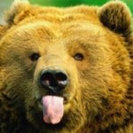 В Иркутской области собака спасла хозяйку от медведя